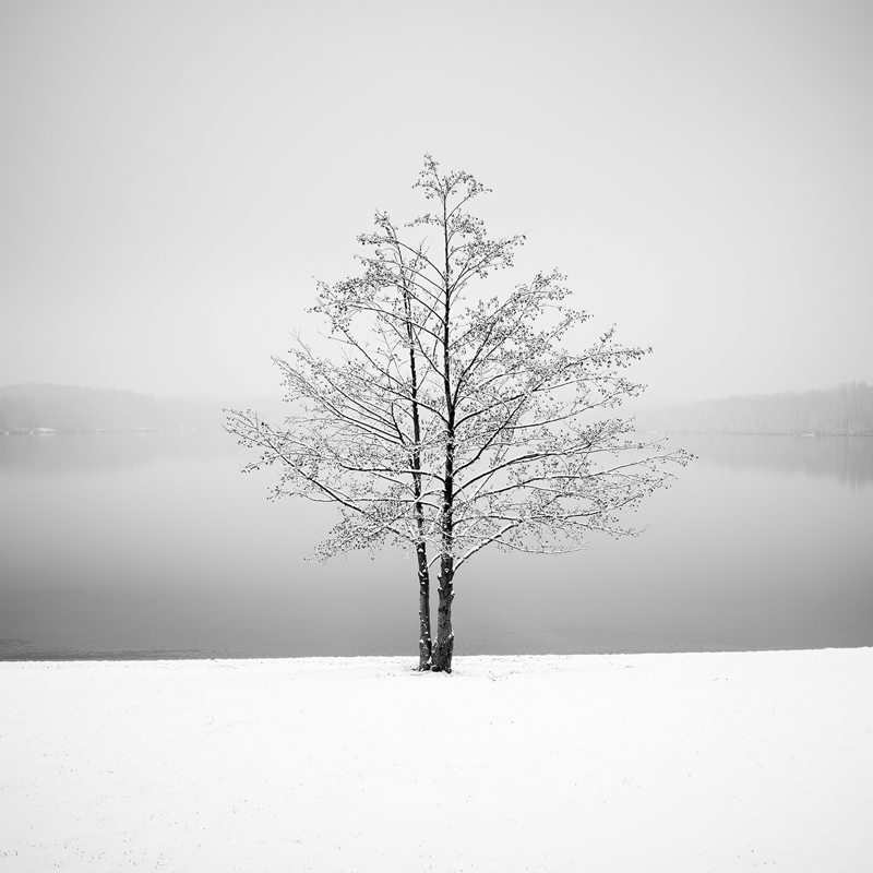 Winter by the Lake