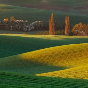 Morning in South Moravia